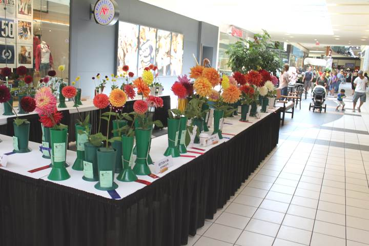 show-table-1