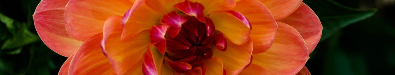 Alberta Dahlia & Gladiolus Society
